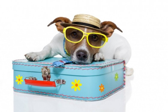 cane-in-vacanza